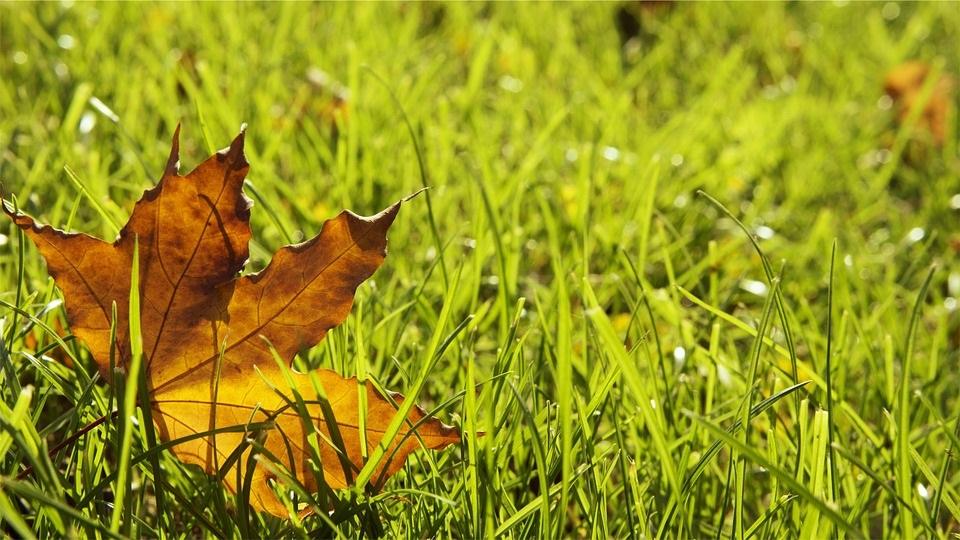 grass-698649_960_720